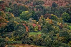 Autumn Colouring in Woodland in County Dublin