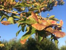 Autumn Colours Immagini Stock Libere da Diritti