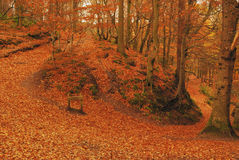 Autumn colours. In Gelt woods, Carlisle Royalty Free Stock Photo