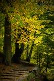 Autumn colours. The autumn colours at mountain Royalty Free Stock Photo