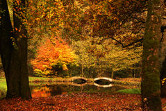 Autumn colours. And a bridge Stock Image