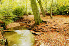 Autumn colours. Autumn woodland and colours - England Royalty Free Stock Photos