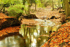 Autumn colours. Autumn woodland and colours - England Stock Images