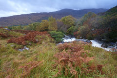 Autumn Colours. Mountains and stream in The Black Valley, Co.Kerry, Ireland Royalty Free Stock Images