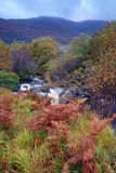 Autumn Colours. Mountains and stream in The Black Valley, Co.Kerry, Ireland Royalty Free Stock Photo