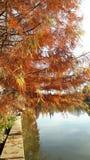 Autumn Colours fotografia de stock royalty free
