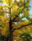 Autumn Colours foto de archivo libre de regalías