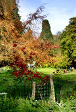 Autumn Colours. Sculpture of a Deer in an English Park surrounded by Autmn colours Royalty Free Stock Image
