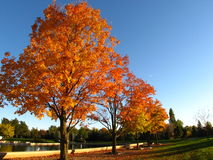 Autumn colours Royalty Free Stock Photography