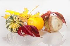 Autumn colours Stock Image