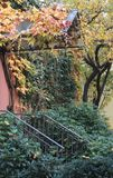Autumn Colours Imagens de Stock