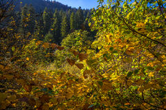 Autumn Colours Fotografia Stock Libera da Diritti