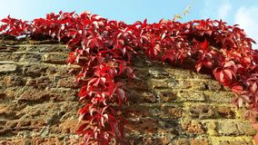 Autumn Colours fotografia stock
