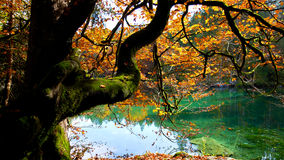 Autumn Colours Photo stock