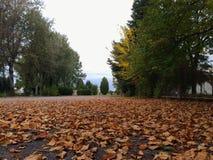 Autumn Colours Stock Afbeelding