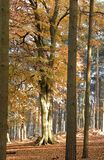 Autumn Colours. Forest glade in Autumn Stock Images