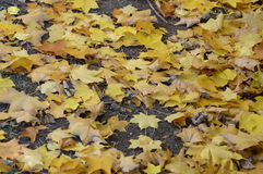 Autumn Colours Stock Afbeeldingen