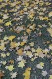 Autumn Colours Royalty-vrije Stock Afbeeldingen