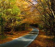 Autumn Colours foto de stock royalty free
