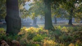 Autumn Colours Fotos de archivo libres de regalías