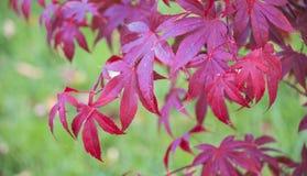 Autumn Colours Fotografie Stock Libere da Diritti