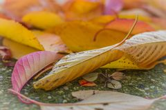 Autumn Colours Images libres de droits