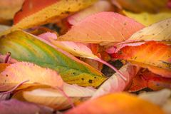 Autumn Colours Image stock