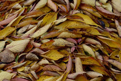 Autumn Colours Stock Foto's