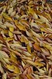 Autumn Colours Stock Foto