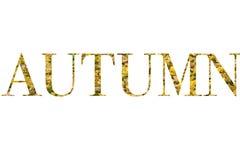 Autumn Colours Immagine Stock Libera da Diritti