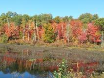 Autumn Colours Stockfotos