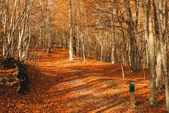 Autumn colours: beautiful landscape with brown leaves on the floor and some trees in the forest. Parc Natural del Montseny, Catalo stock images