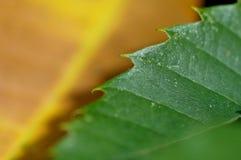 Autumn colours (beech) stock photography