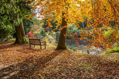 Autumn colours. Bench in the park with autumn colours Royalty Free Stock Images