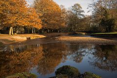 Autumn Colours Brockenhurst Royalty Free Stock Photo