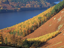 Autumn Colours By Thirlmere Stock Photography
