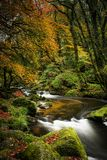 Autumn colours, and cascading water, Golitha Falls, Cornwall stock photos