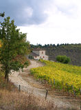 Autumn Colours in Chianti Countryside 1 Royalty Free Stock Photography