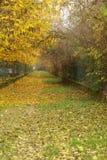 Autumn colours Stock Photo