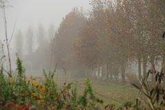 Autumn colours Royalty Free Stock Images
