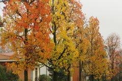 Autumn colours Stock Photography