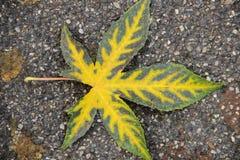 Autumn colours Stock Images