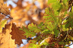 Autumn colours Stock Photography