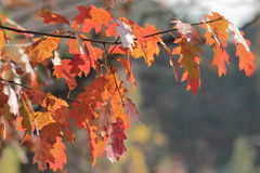 Autumn colours Stock Photo