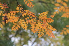Autumn colours Stock Photos