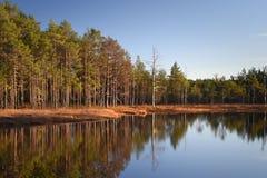 Autumn Colours em Lahemaa Estônia imagem de stock