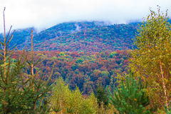 Autumn. Colours of the fall in the mountains Royalty Free Stock Images