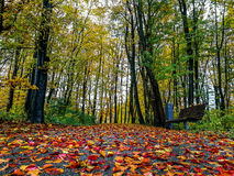 Autumn Colours in the forest Royalty Free Stock Image