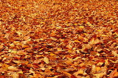 Autumn colours in forest leaf Stock Photos