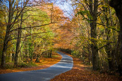 Autumn Colours. In the forests of Ireland Royalty Free Stock Images
